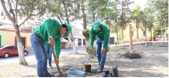 Plantación de árboles en Colón, Qro.